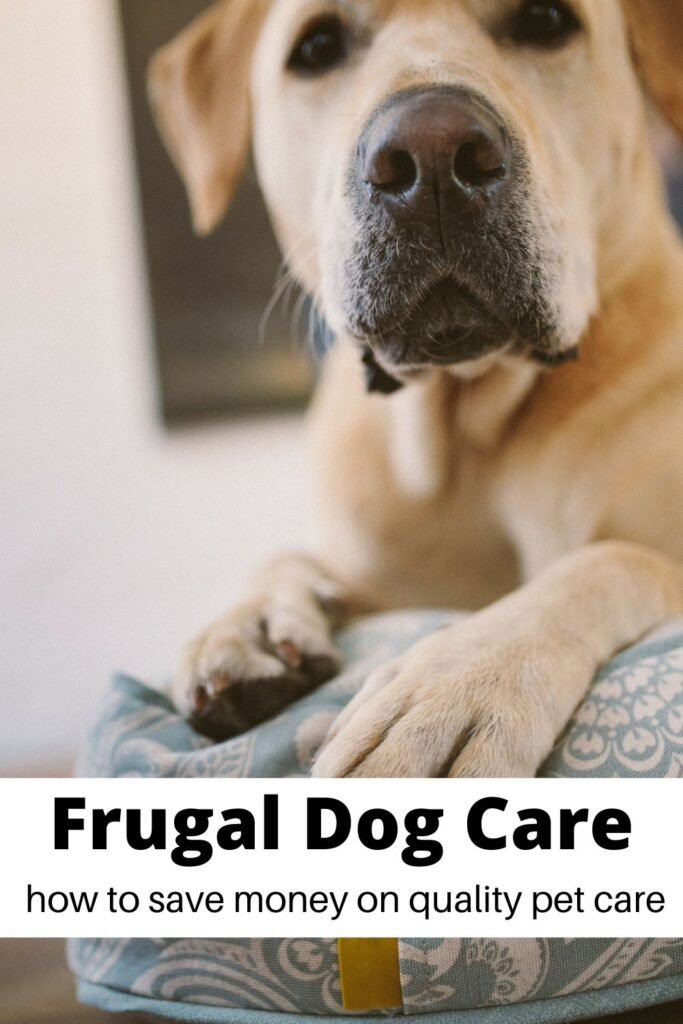 close up of tan puppy with text overlay 'Frugal dog care '