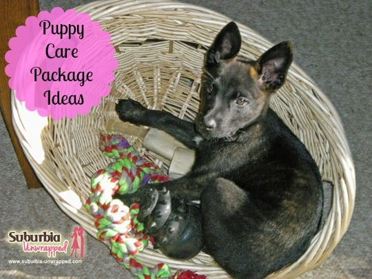 puppy care package ideas