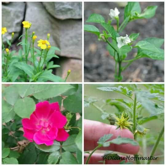 Tips for the Beginning Gardener