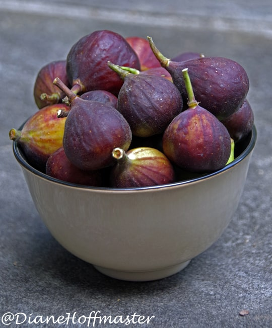 Fig Recipes