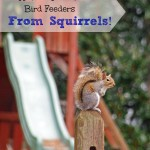 How to Protect Your Bird Feeder From Squirrels