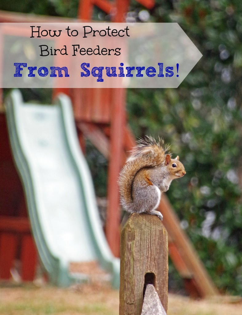 How to Protect Your Bird Feeder From Squirrels 2