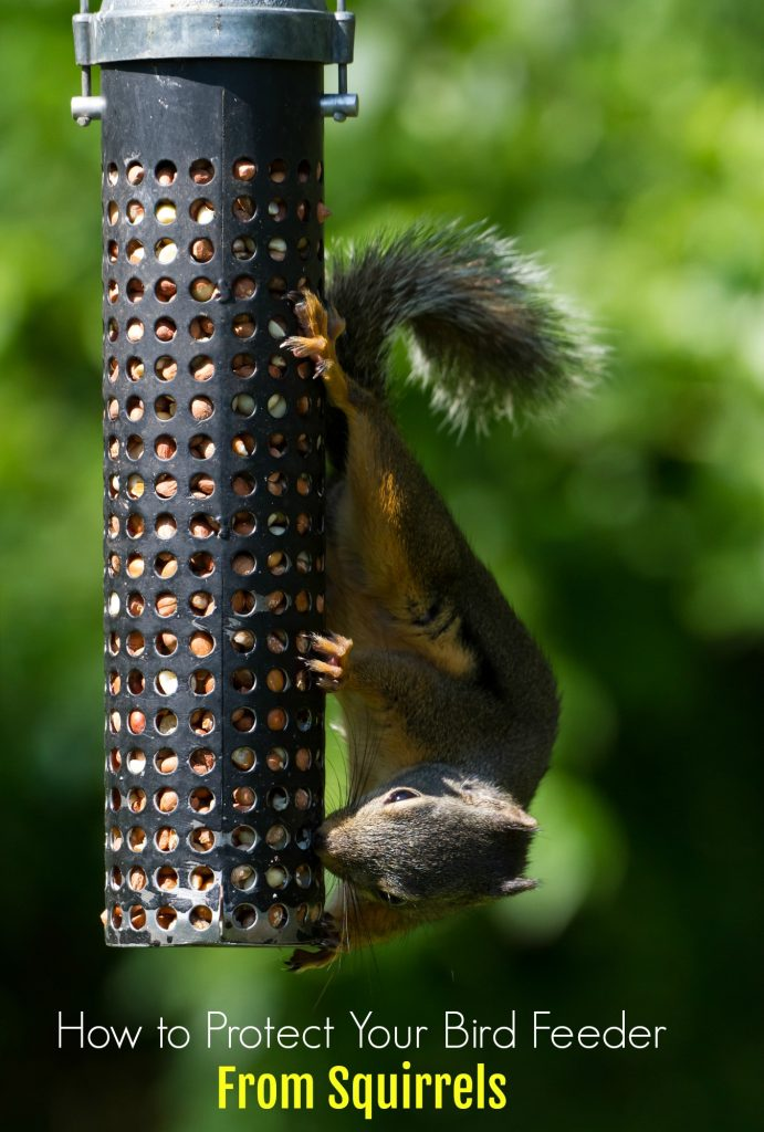 keep from eating bird feeder squirrel birdfeeders off to squirrels defend how defending your feeders