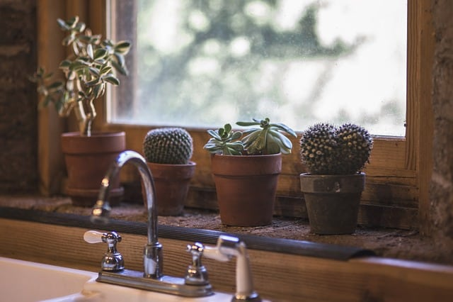 kitchen sink with cactus