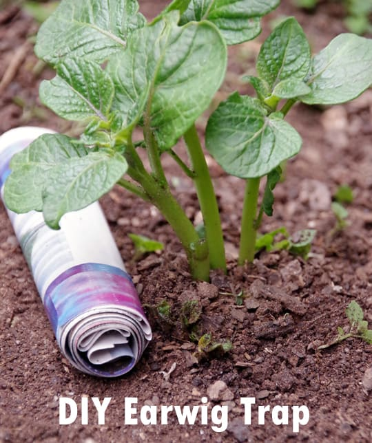 Easy Gardening tips that save you money