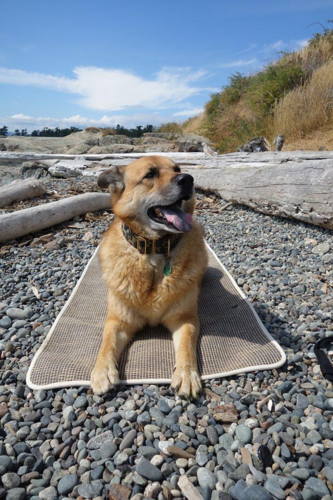 dog on yoga mat on beach