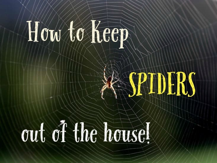 How to keep spiders out of the house to prevent spider bites. Works on Wolf spiders as well as other types of spiders.