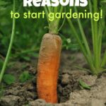 5 Unusual Reasons to Build a Backyard Garden