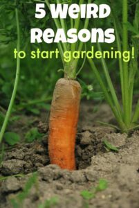 5 Weird Reasons to Build a Backyard Garden