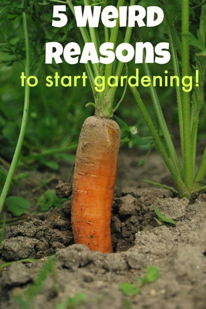 5 Weird Reasons to Build a Backyard Garden