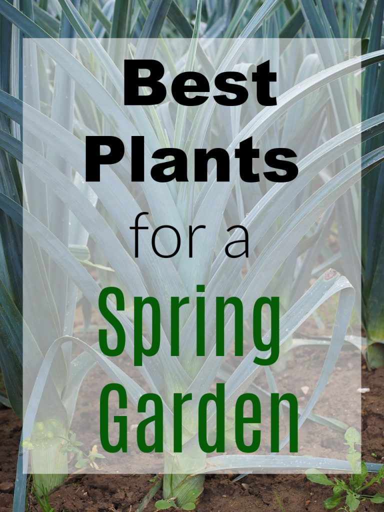 Best Plants for a Spring Garden