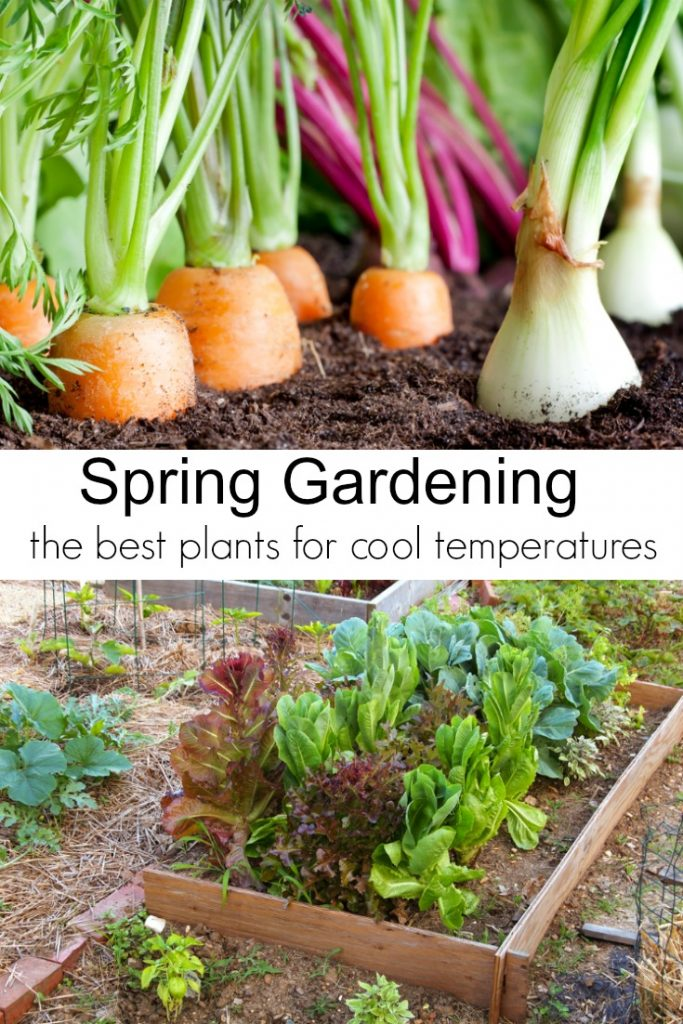 Spring Gardening Tips and the Best Plants for Cool Temperatures