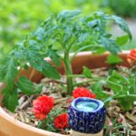 Gardening Tips for Growing Tomatoes in Containers and a Unique Gardening Gift Idea