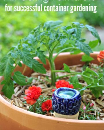 Gardening Tips for Growing Tomatoes in Containers