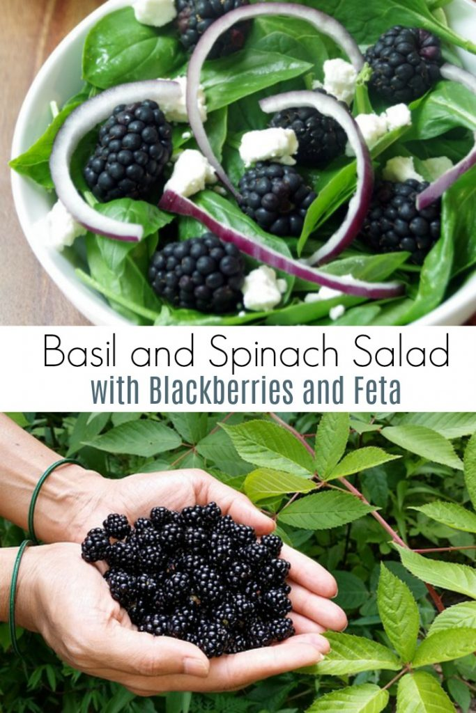Basil and Spinach Salad with Blackberries and Feta in a white bowl with hands full of fresh blackberries