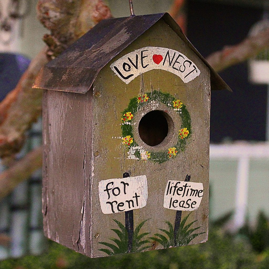 how to attract birds to your backyard suburbia unwrapped