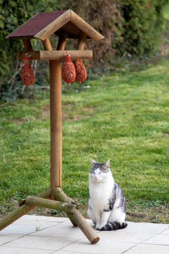 cat sitting under bird feeder