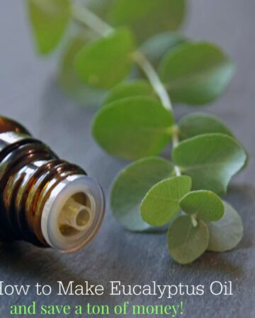 How to make eucalyptus oil and save a ton of money. An easy essential oil DIY project.