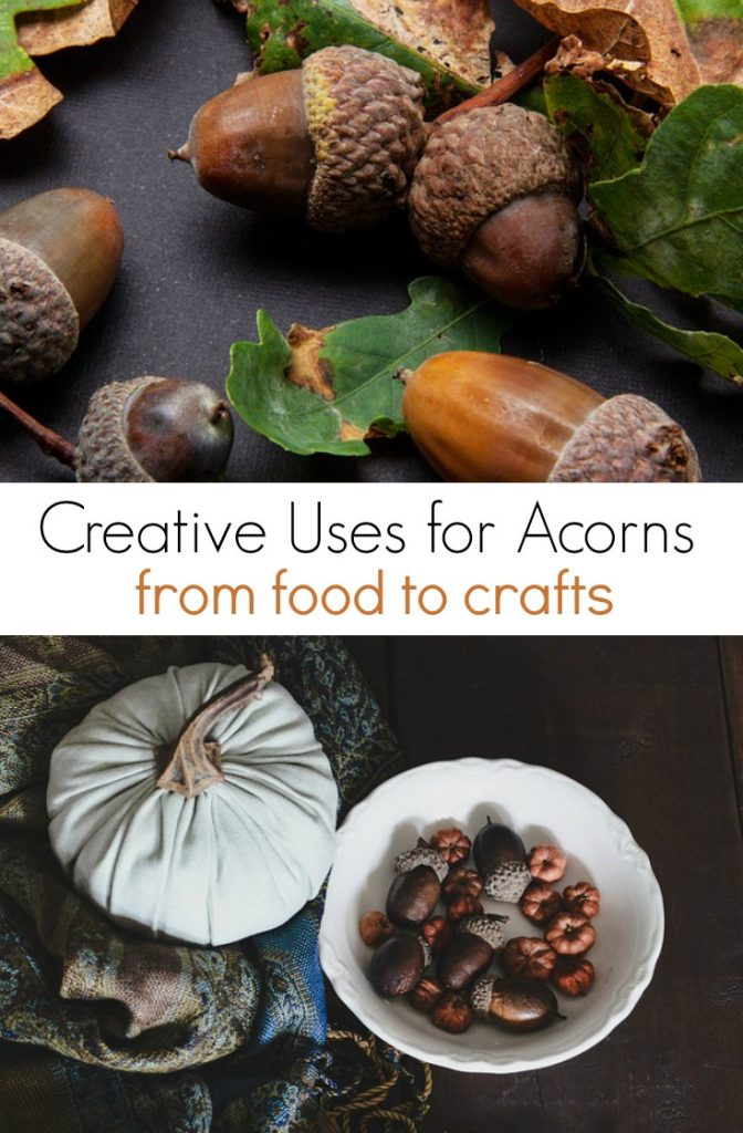 What to do with Acorns from food to crafts