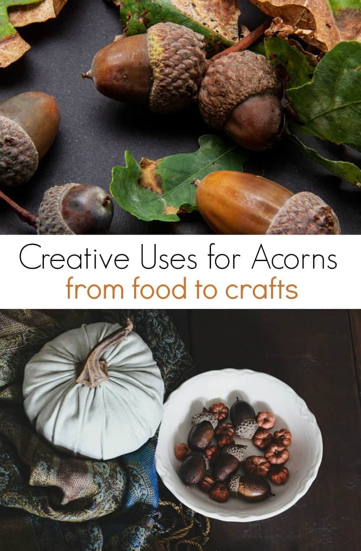 Looking for ways to use acorns that are plentiful this fall? Here are a few creative things to do with acorns to keep you and your kids busy!  From acorn crafts to eating acorns as food, there are plenty of ways to use them!