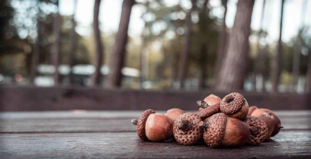 creative things to do with acorns