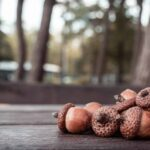10 Things To Do With Acorns for Loads of Fall Fun!