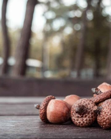 10 Creative Things to do With Acorns for Loads of Fall Fun!