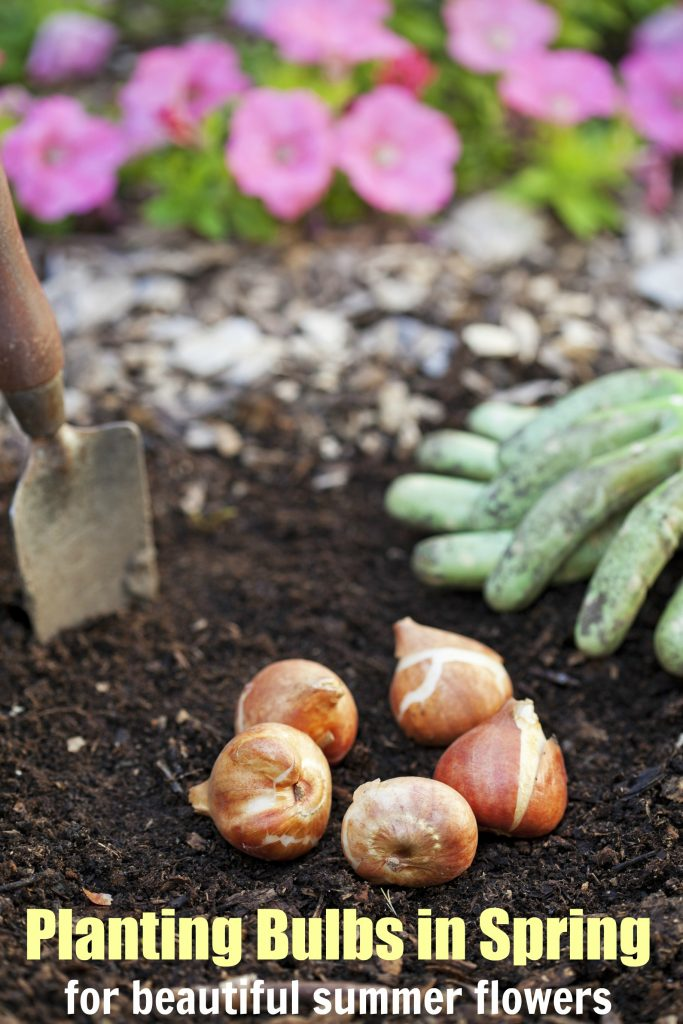 Planting Bulbs in Spring for Summer Flowers