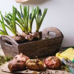 Planting Bulbs in Spring for Vibrant Summer Flowers