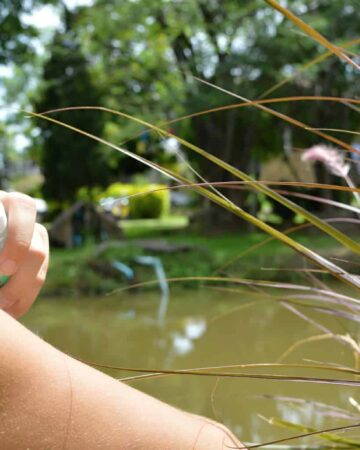 Mosquito Protection Tips to Help You Reclaim Your Backyard!