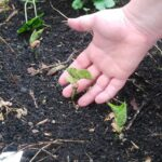 Organic Gardening with Kids. How to Make it Fun AND Rewarding!