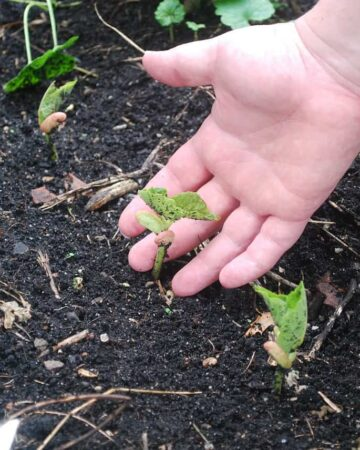 Organic Gardening with Kids. How to Make it Fun AND Rewarding!
