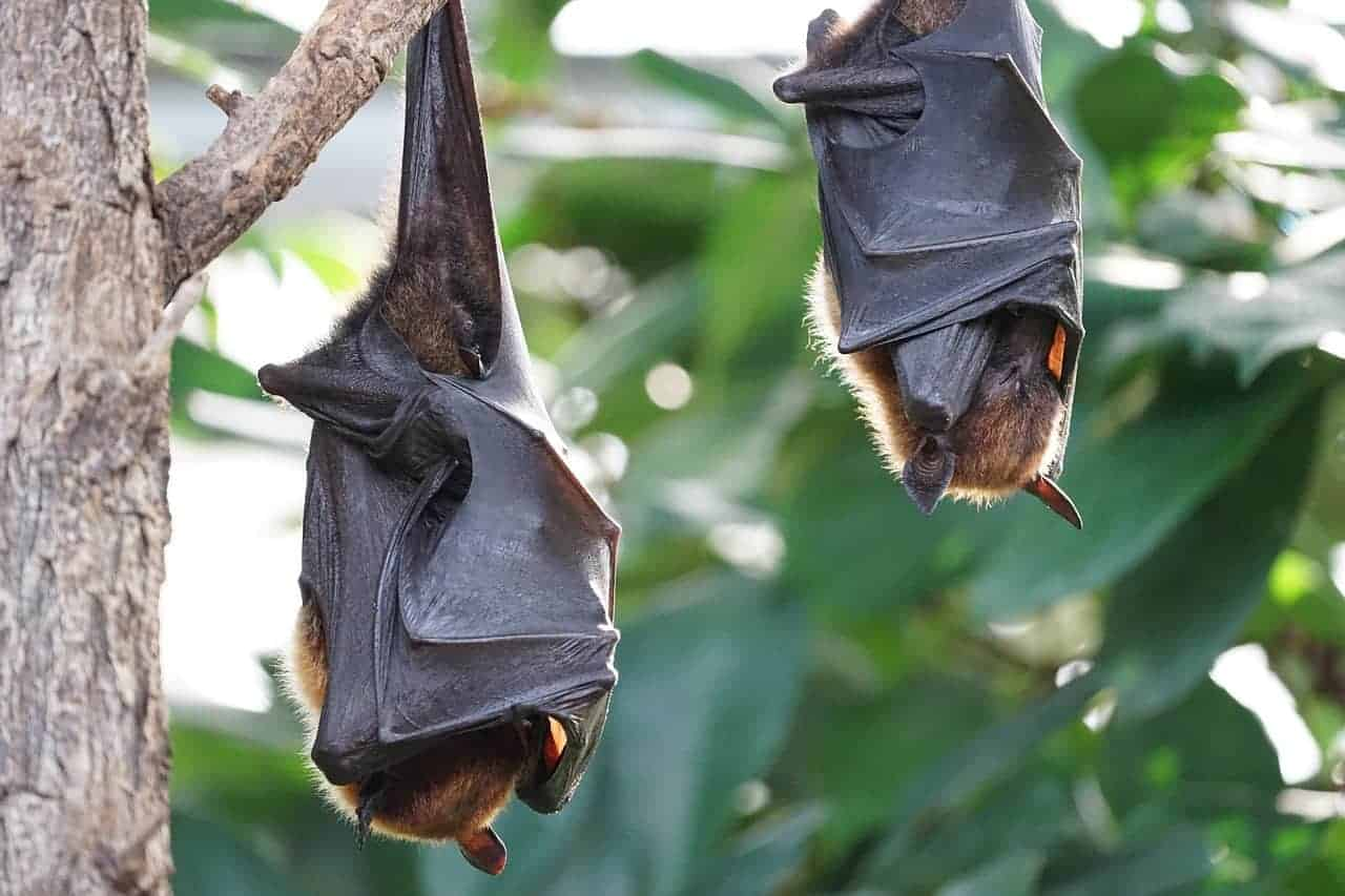 how to attract bats to your yard suburbia unwrapped