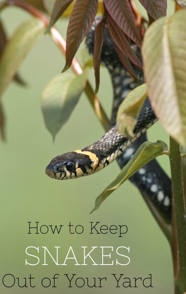 Keep snakes away by following these tips on how to keep snakes out of your yard!
