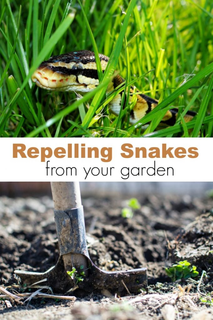 Repelling Snakes From Your Garden