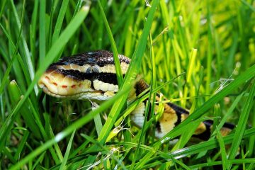 How to Keep Snakes Out of Your Yard for Greater Peace of Mind