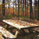 Simple Fall Activities to Celebrate Cooler Weather