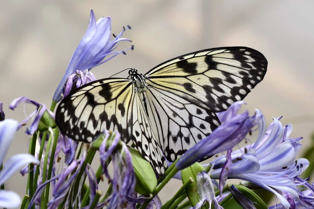 How To Attract Butterflies To Your Yard This Spring
