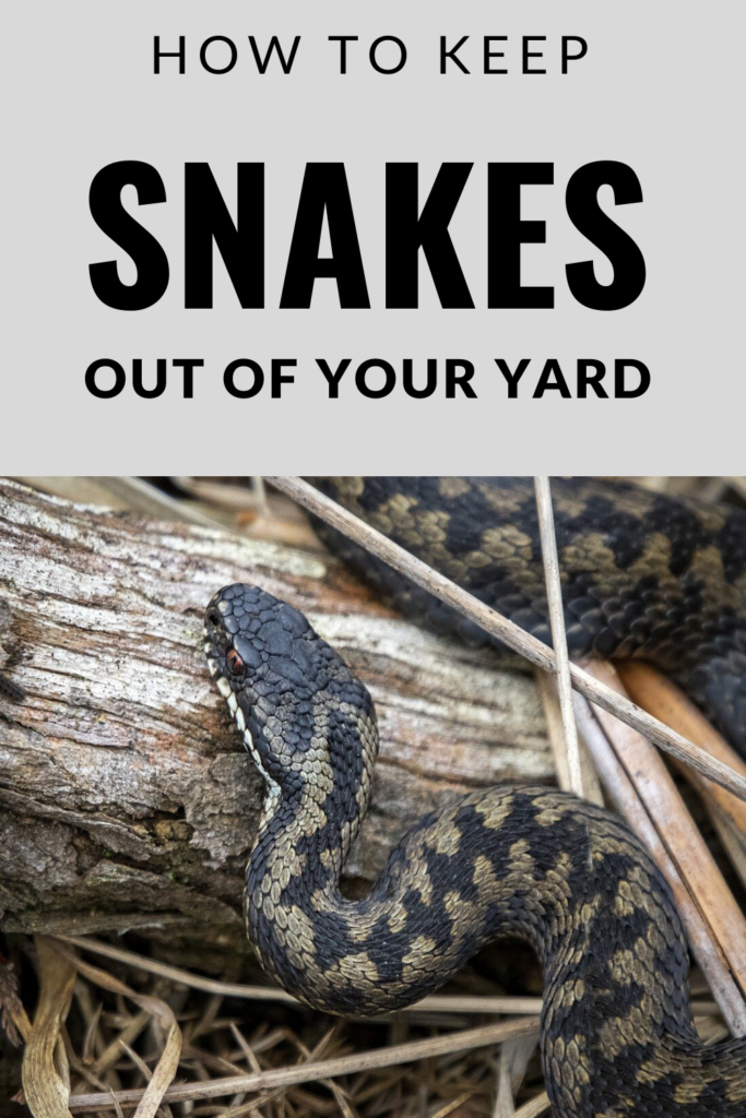 Keeping Snakes Out of Your Yard