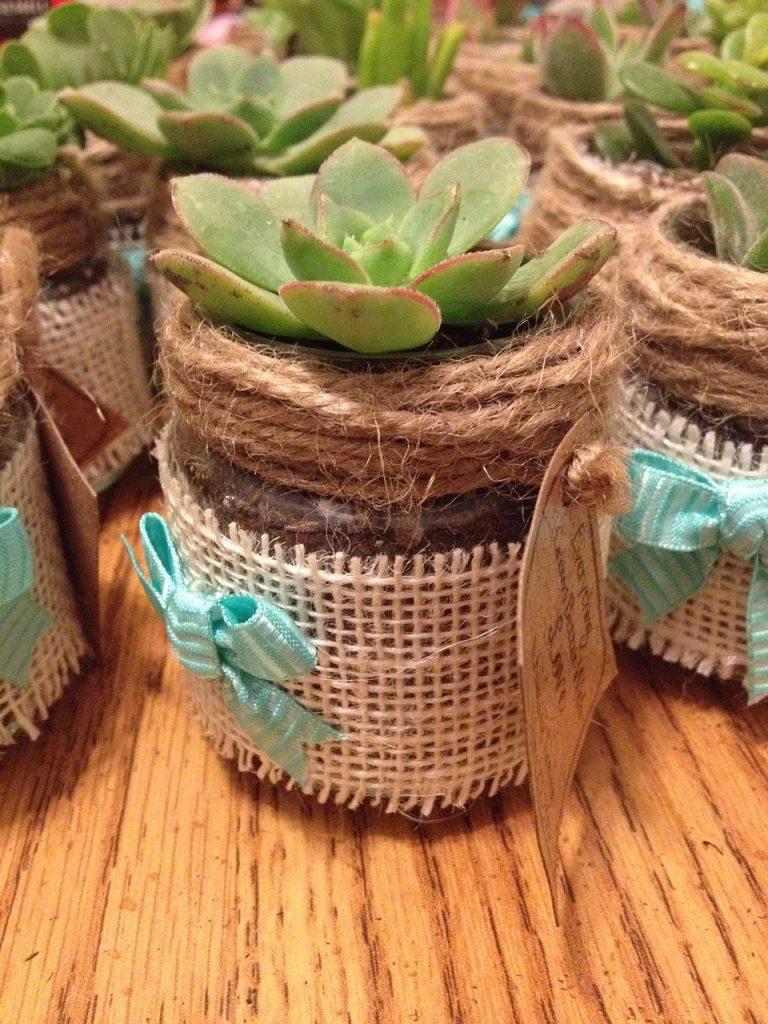 burlap wrapped plant