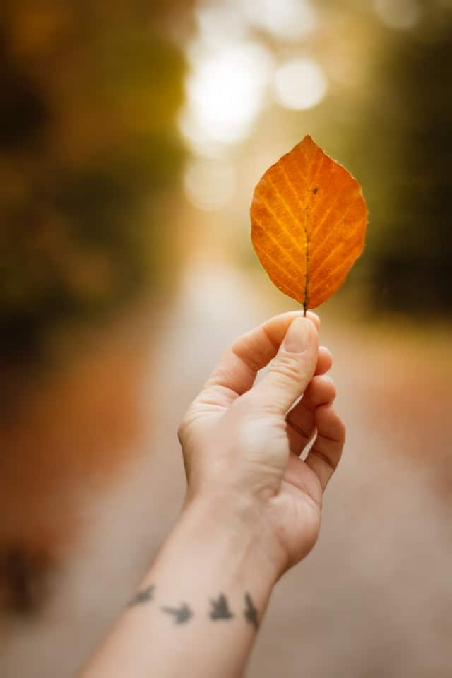 hand holding fall leaf