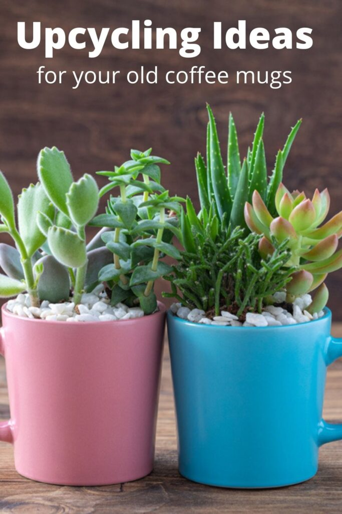 plants in old coffee mugs with small stones