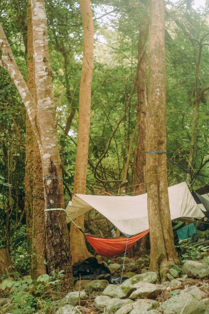 camping hammock hanging in tree